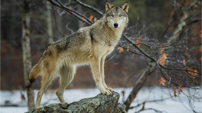 修道オープンアカデミー「森•オオカミ•ヒトの良い関係を考える」