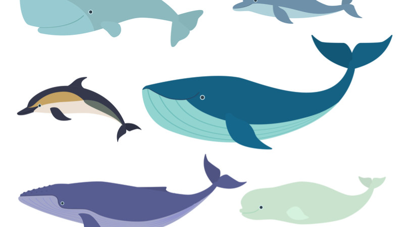 サイエンスカフェ伊丹「哺乳類が海に引っ越すと?~古生物学から生き物の進化と私たちの地面を考えてみる~」