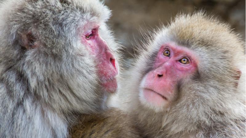 サイエンスカフェ伊丹「サルを見て、人を知る ~サルの人間科学~」