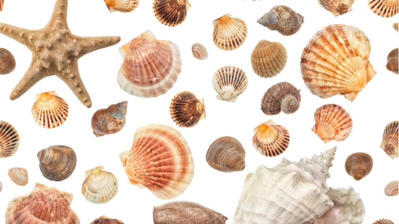 ニッポン貝人列伝 -時代をつくった貝コレクション-