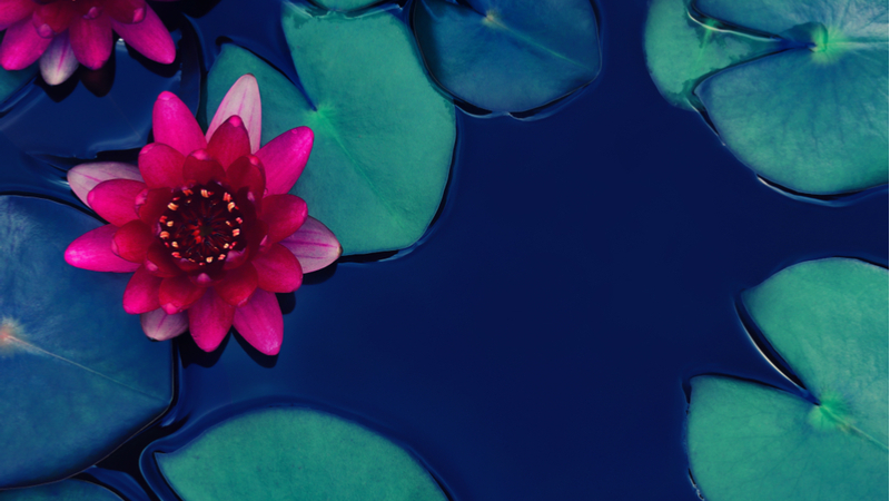 仏教文化講座「ふれあいが生きる意欲をつなぐ すべての出来事には意味がある」