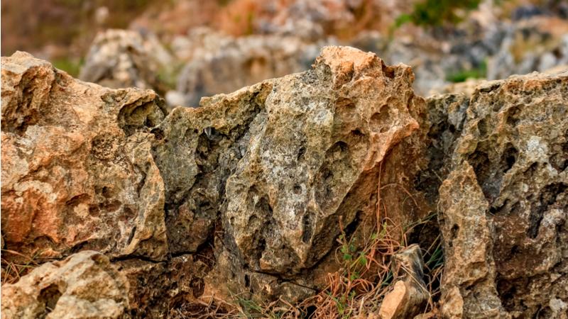 自然観察会「棚倉断層がつくった地形と岩石」
