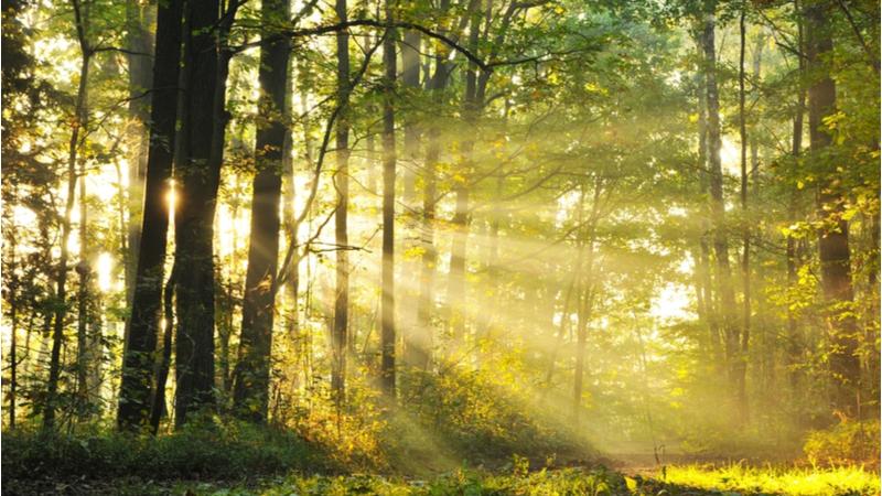 公開講座『哲学者 内山 節氏を迎えて』第14回「哲学の森」