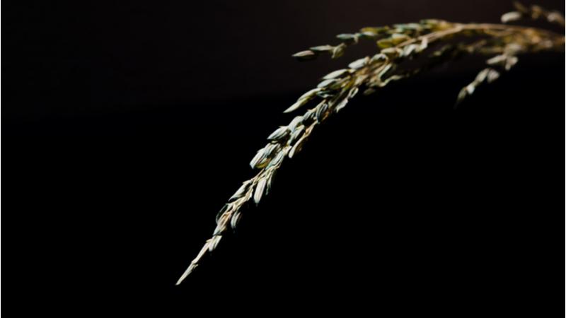 ひらめき☆ときめきサイエンス「生育不良になった植物の栄養診断をしてみよう!」
