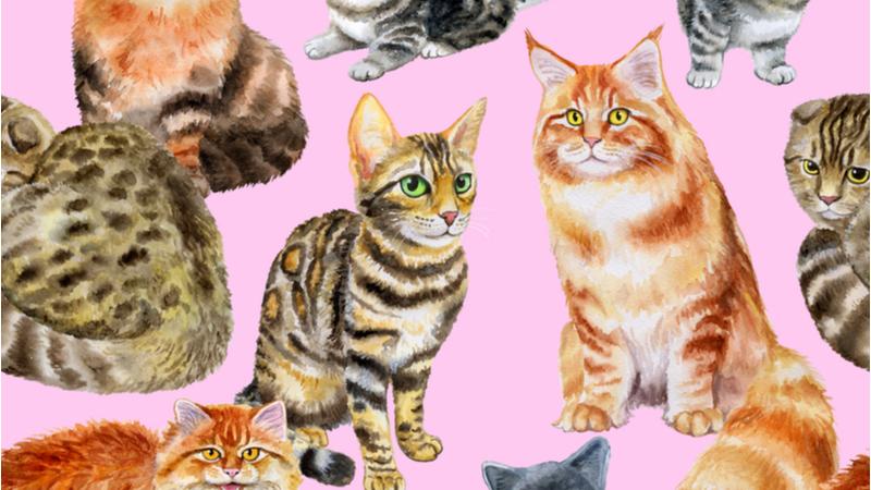 ようこそマザーグースの世界へ―ネコの歌