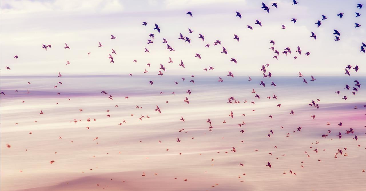 【鳥取県】令和2年度愛鳥週間ポスターコンクール《作品募集》