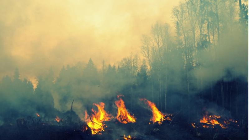 令和2年度 山火事予防ポスター用原画及び標語の作品募集