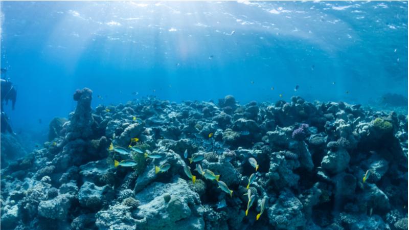 【お茶の水女子大学】第11回女子中高生のための先端科学 セミナー「海にいこうよ -サイエンスの宝庫へ-」(オンライン)